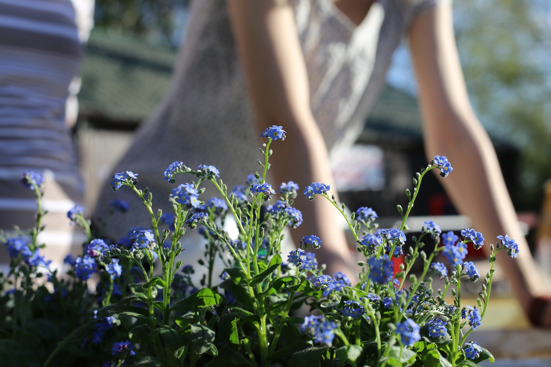 Woman in front of flowers on the AB Homes blog Prepping Your Yard for Spring