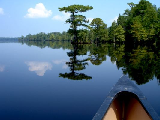 Lake Drummond reflecting the blue sky in Suffolk Virginia