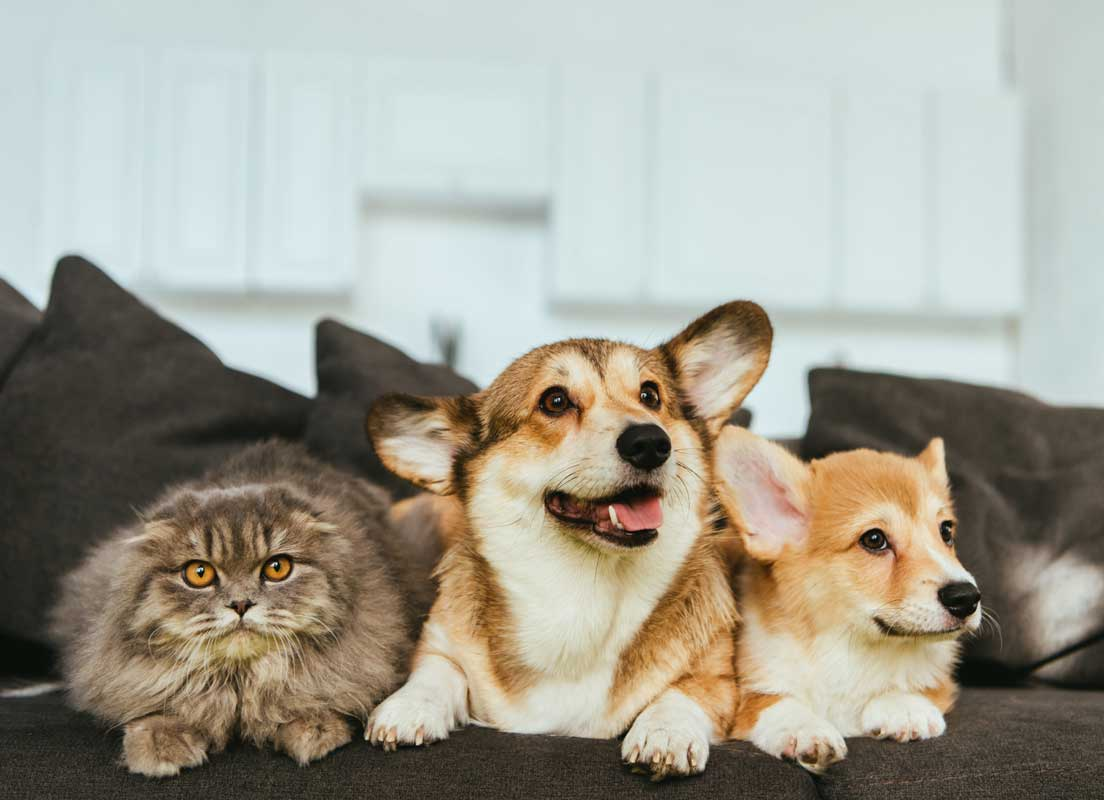 Cute Picture Of 2 Dogs And A Cat Sitting On A Couch Showing A Pet-friendly Home